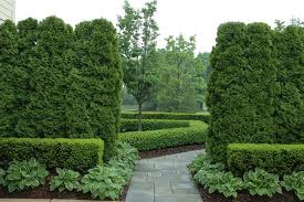 Evergreen Privacy Trees